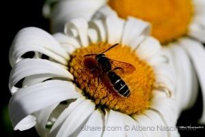 Macro/Beija flor