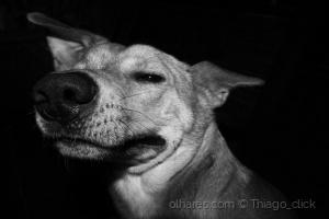 Animais/Cão doidão