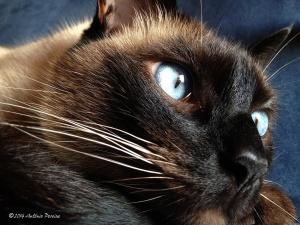 Outros/Gandalf, o gato de olho azul.