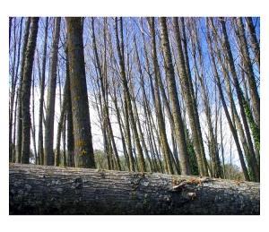 """Gentes e Locais/""""Troncos de árvores..."""""""""""