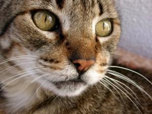 /O meu gato