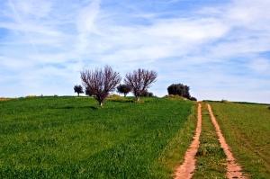 Paisagem Natural/Caminhos
