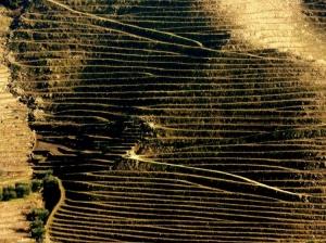 Paisagem Natural/Linhas de Ouro