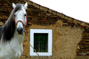 Animais/The horse and the window