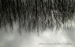 Abstrato/trees.