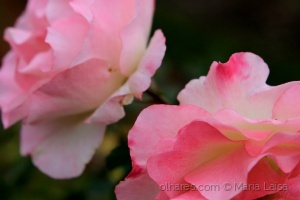 Paisagem Natural/sempre rosas