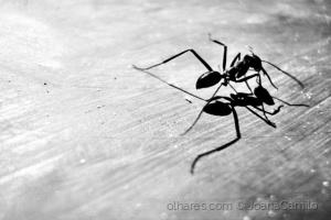 Animais/Big, big ant