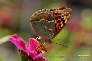 Macro/borboleta