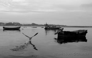 Outros/A descolagem da gaivota