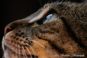 Macro/Olhos de gata