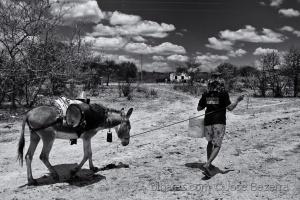 Fotojornalismo/O jumento é nosso irmão....