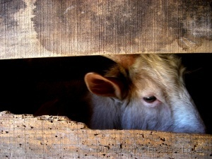 Animais/Não se prende o olhar....