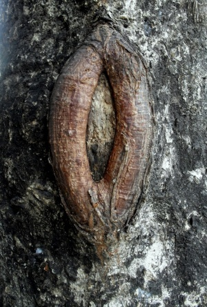 Paisagem Natural/Vagina vegetal