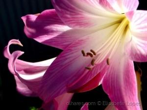 Paisagem Natural/Raio de sol com flor