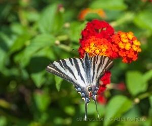 /flor vermelha com borboleta