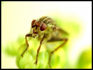 /Até já as moscas fazem bolhinhas com a boca...