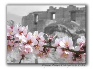 Arte Digital/Flor de amendoeira...