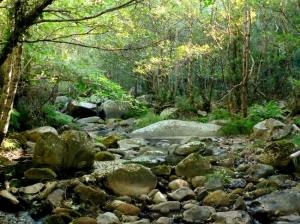 Paisagem Natural/Para... e ouve o som do paraíso