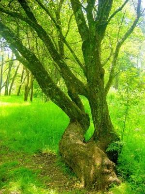 Paisagem Natural/Árvore