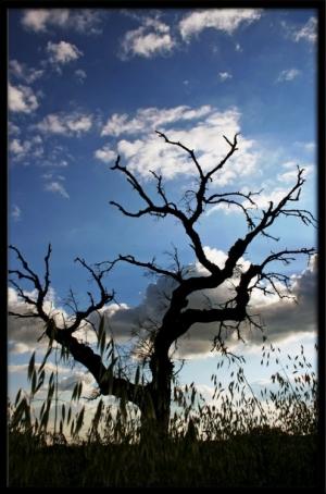 Paisagem Natural/As árvores sangrentas, revoltadas, Gritam!!!!
