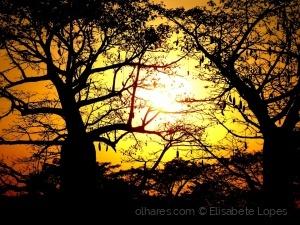 Paisagem Natural/África Mágica