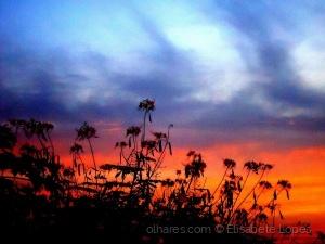 Paisagem Natural/A valsa do crepúsculo