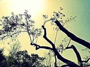Abstrato/Silhuetas