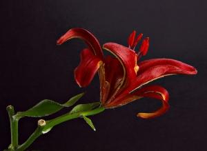 /Last Bloom