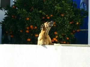 /Cão que Canta