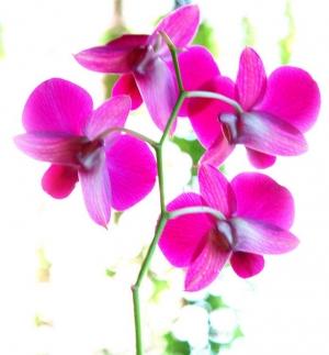 """/""""orquídea"""""""