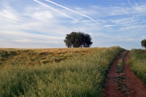 Paisagem Natural/De manhã fui por este caminho