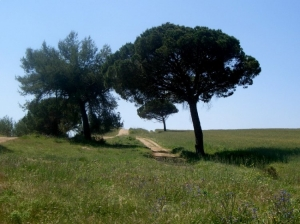 Paisagem Natural/caminhos da serra