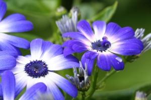 /Flores para ti.