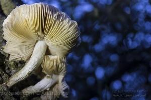 Macro/Cogumelos