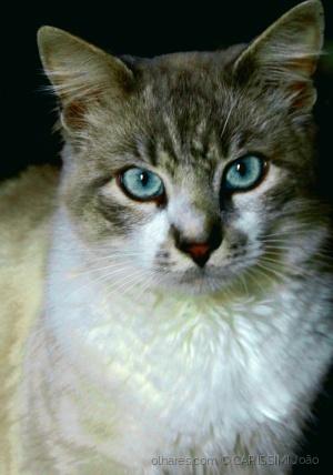Outros/Gato da tia Anastácia (3)