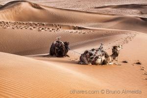 Gentes e Locais/Dunes