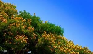 Outros/Flores de primavera e sol de verão.