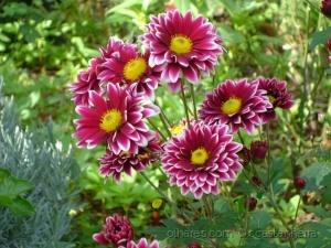 Macro/como uma flor vermelha