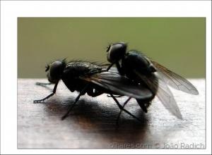 Macro/As moscas