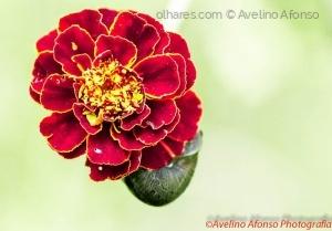 Macro/A flor & o Caracol