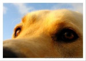 Animais/O olhar...