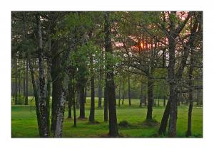 Paisagem Natural/O Bosque