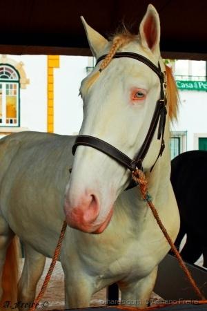 Animais/Cavalo Branco