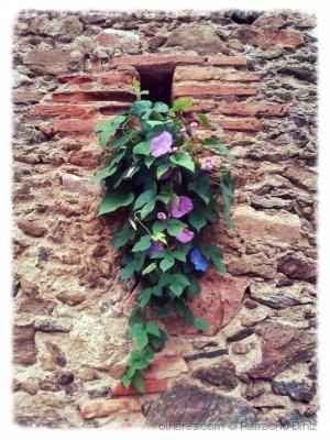 Paisagem Urbana/Flores silvestres