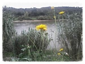 Paisagem Natural/Flores silvestres 1