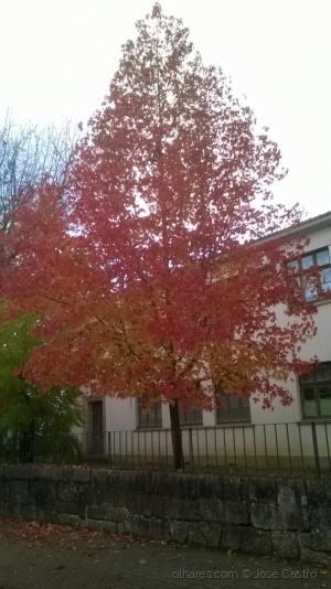 Paisagem Natural/Árvore em chama