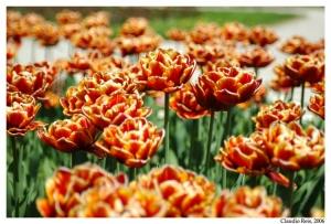 Macro/Flores de Salzburgo