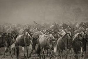 Animais/A Grande Migração