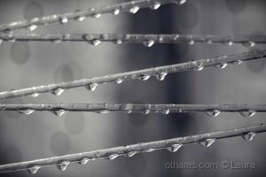 Abstrato/Depois da chuva