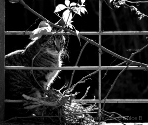 Animais/aqui há gato...